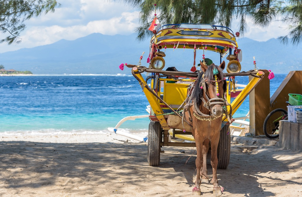 Work horse at the island of Gili Tranwagan, Lombok.