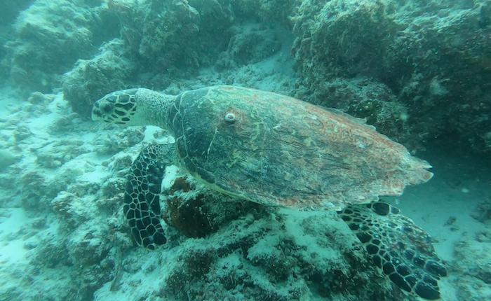 Thulusdhoo Scuba Diving